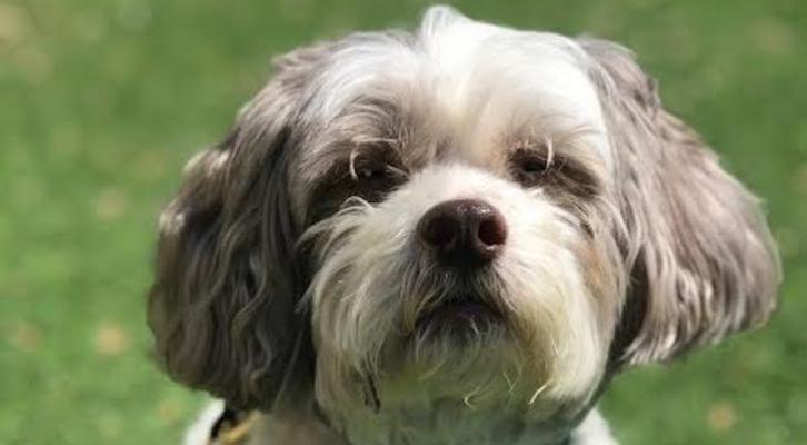 Dog of the Week: Windsor