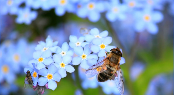 Nominate Local Gardens for Plant Bee Friendly Awards