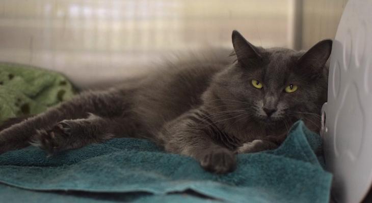 Cat of the Week: Yogi