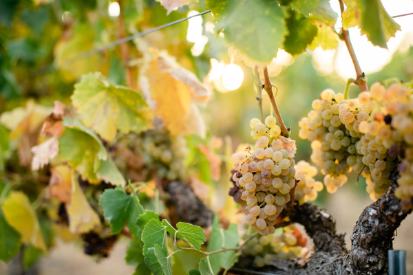 Third Annual Santa Barbara County Farm Day Features Two Wineries title=