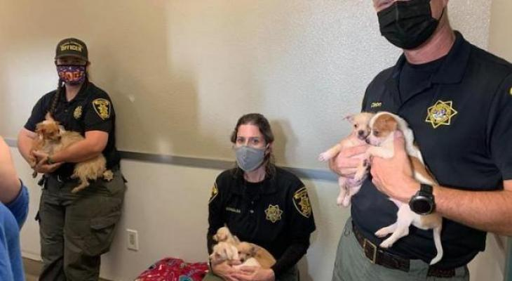 Animal Services Impound 104 Dogs from Lompoc Home