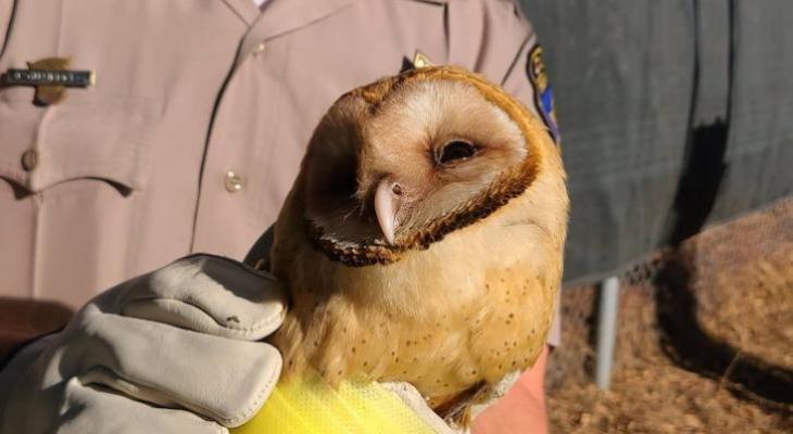 Good Samaritan and CHP Rescue Injured Owl