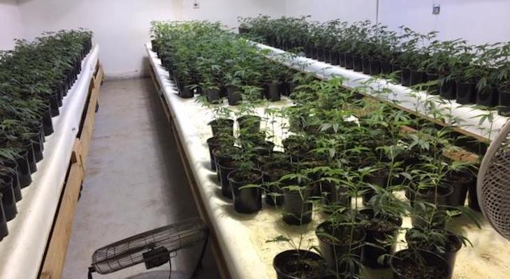 Illegal Marijuana Grow Confiscated in Cebada Canyon Area