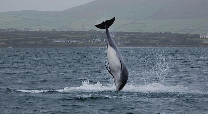 Irish Sister City's Famous Dolphin Mascot Goes Missing