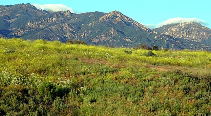 Celebrating the San Marcos Foothills
