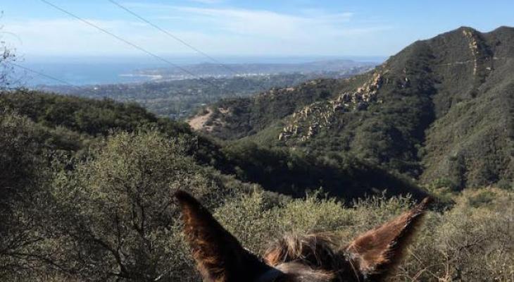 Edison Catway View