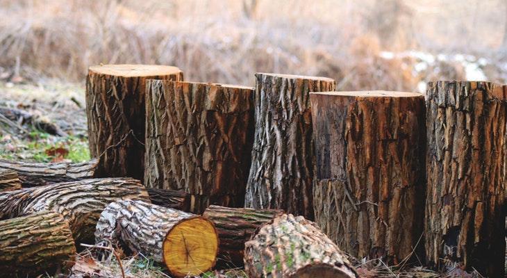 Local Activists Sue to Prevent Logging in Condor Habitat