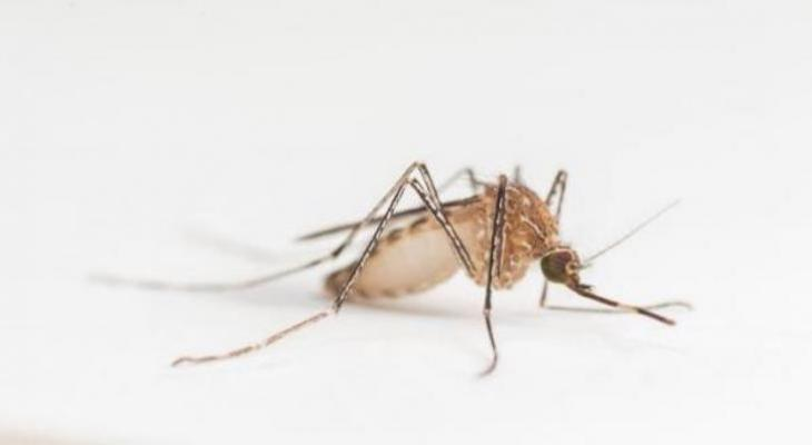 Mosquitoes in Santa Barbara Test Positive for West Nile Virus