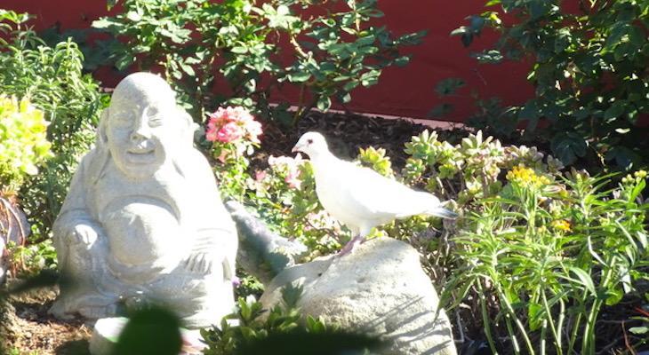 Significado simbólico de las palomas - significados simbólicos Blog por Avia Venefica | Significado simbólico Blog por Avia Venefica