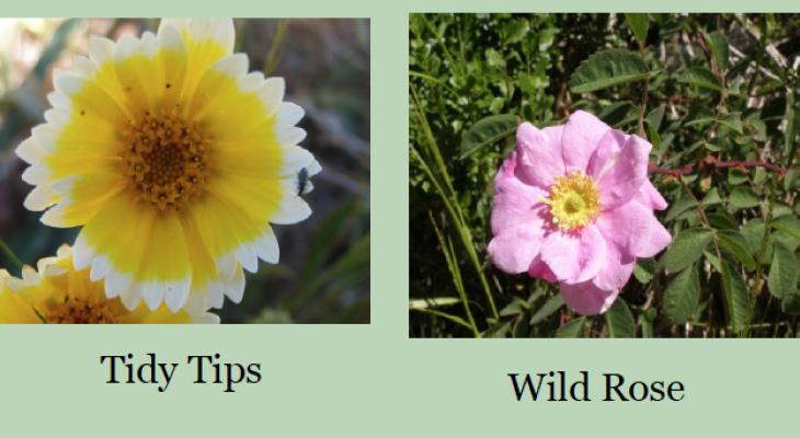 Wildflower Update