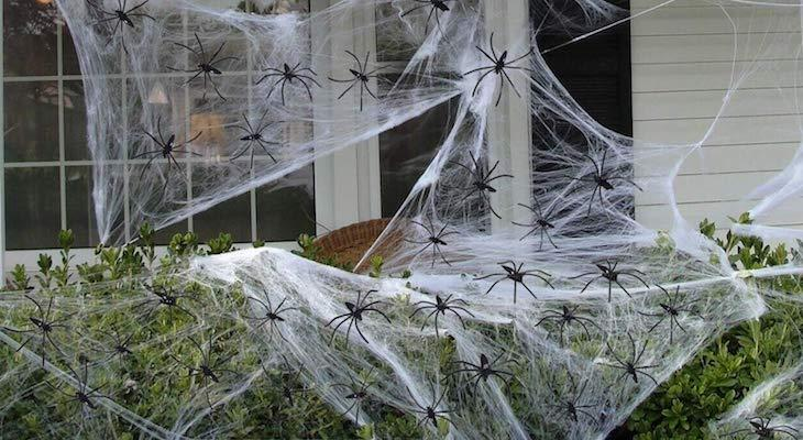 Beware, Fake Halloween Cobwebs Threaten Wildlife