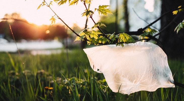 Plastic Bags are Trash