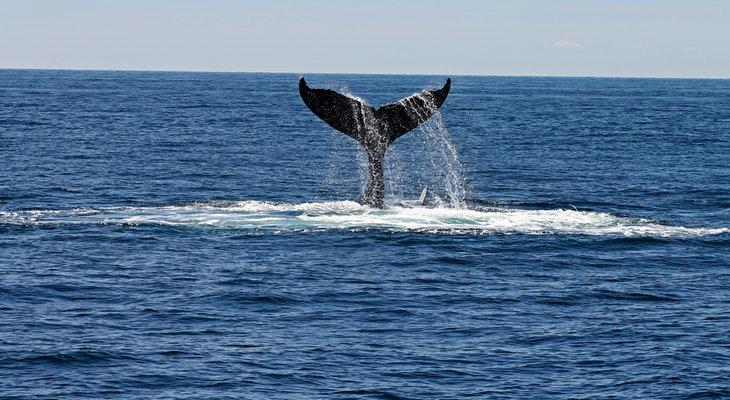 Groups Join Forces to Protect Blue Whales and Blue Skies