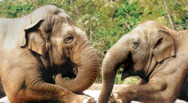 Santa Barbara Zoo's Asian Elephant Sujatha Dies