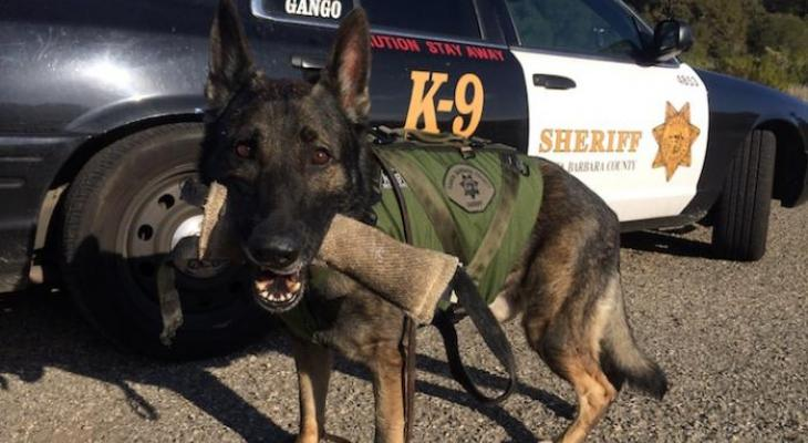 Sheriff's Benevolent Posse Launches Project Deputy Dog