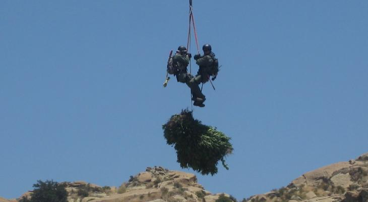 Illegal Marijuana Confiscated from Los Padres National Forest