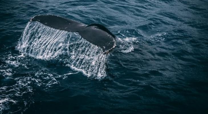 Protecting Blue Whales and Blue Skies