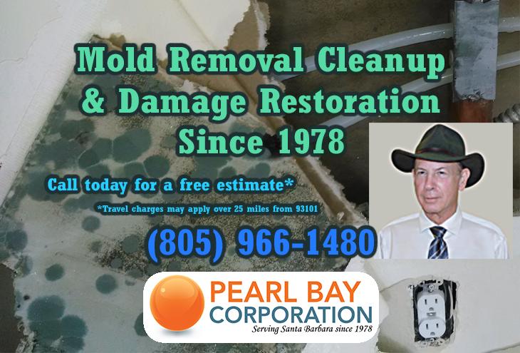 Mold removal cleanup, remediation, & damage restoration