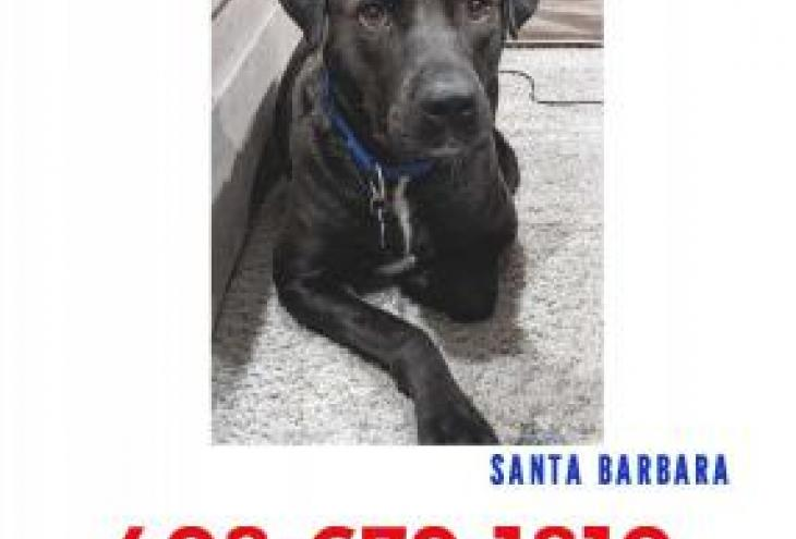 LOST BLACK FEMALE DOG SANTA BARBARA